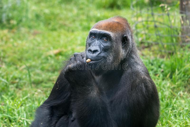 Viaje de la mañana en Ramat Gan Safari Park fotos de archivo