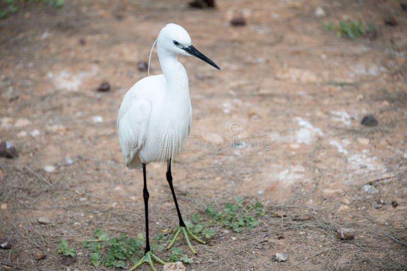 Viaje de la mañana en Ramat Gan Safari Park imagenes de archivo