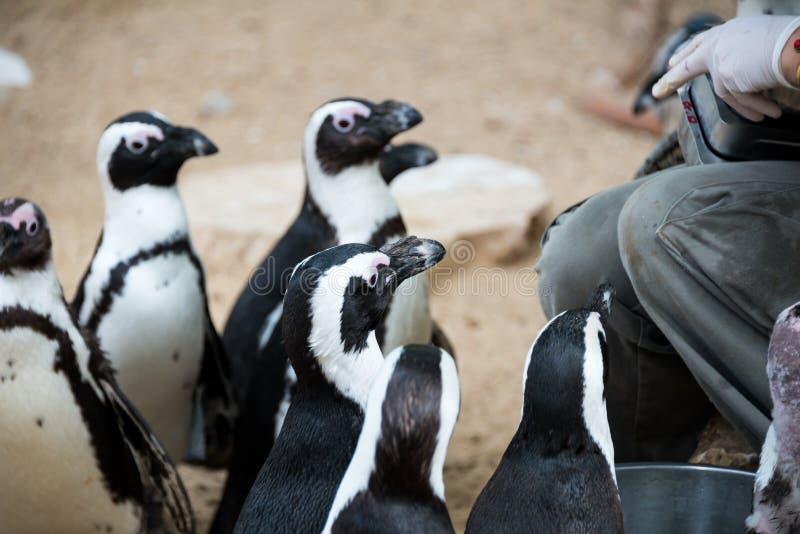 Viaje de la mañana en Ramat Gan Safari Park foto de archivo libre de regalías