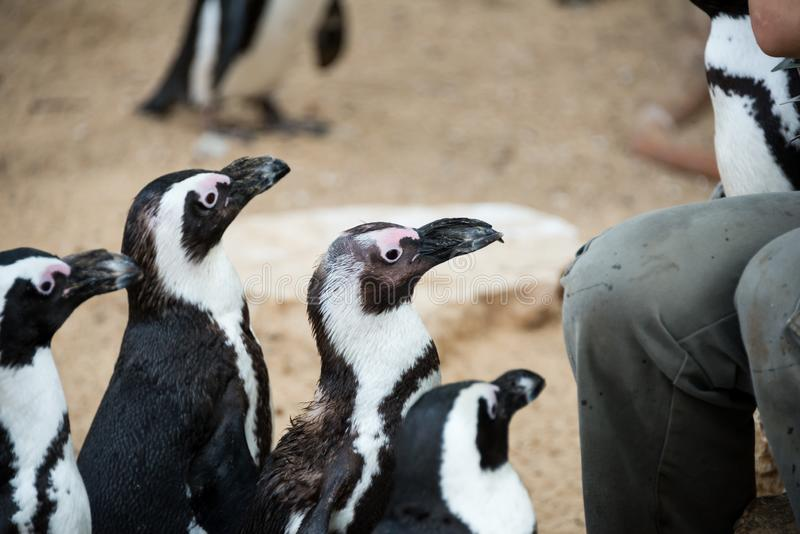 Viaje de la mañana en Ramat Gan Safari Park imagen de archivo