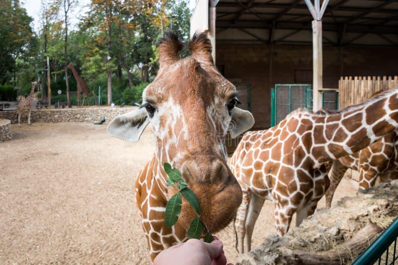 Viaje de la mañana en Ramat Gan Safari Park fotografía de archivo libre de regalías