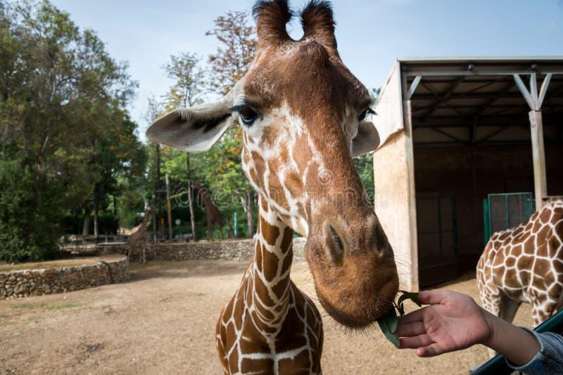 Viaje de la mañana en Ramat Gan Safari Park imágenes de archivo libres de regalías