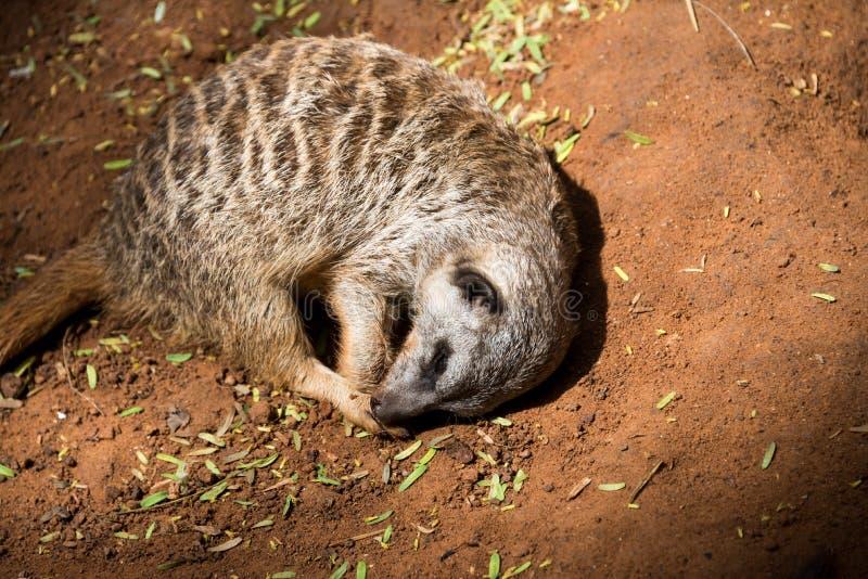 Viaje de la mañana en Ramat Gan Safari Park imagen de archivo libre de regalías