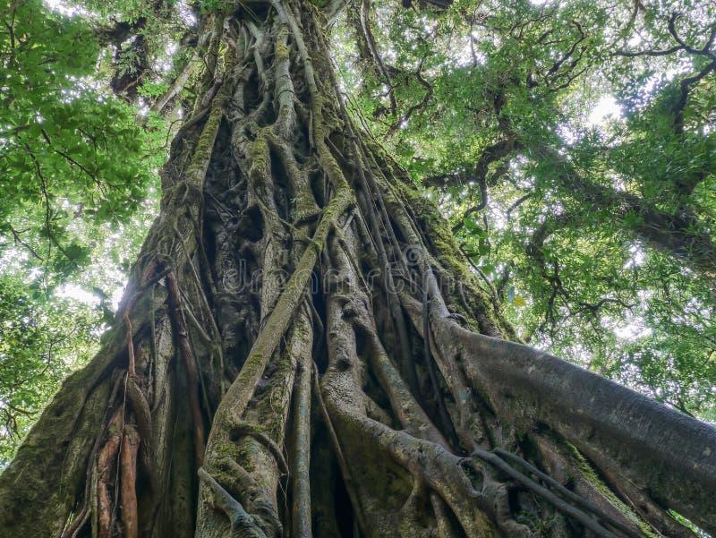 Viaje de Trekkin en Monteverde imágenes de archivo libres de regalías