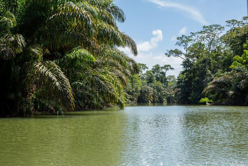 Viaje del río en la selva imagenes de archivo