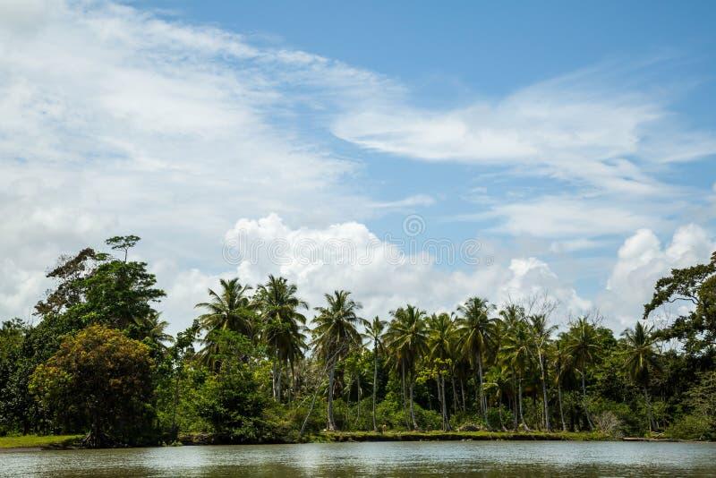 Viaje del río en la selva imagen de archivo