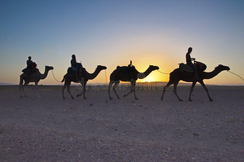 Viaje del senderismo del camello en el desierto del Sáhara marroquí fotografía de archivo libre de regalías