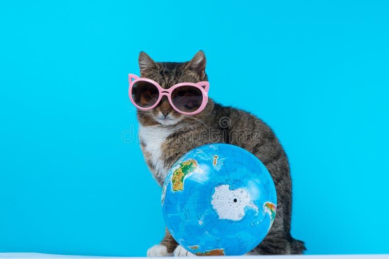 Viajero del gato el gato se encuentra de vacaciones foto de archivo