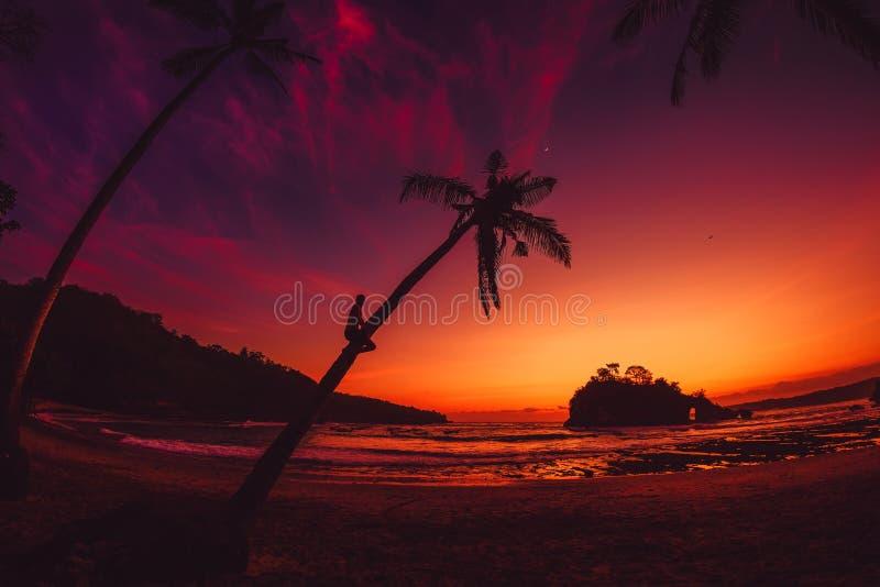 Viajero del hombre en la palma de coco y la puesta del sol brillante en la playa tropical fotos de archivo