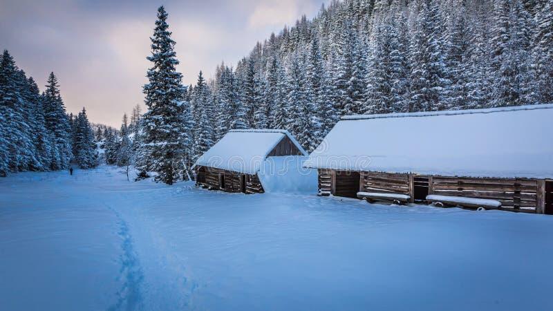 Viajero solitario en rastro de montaña del invierno fotos de archivo