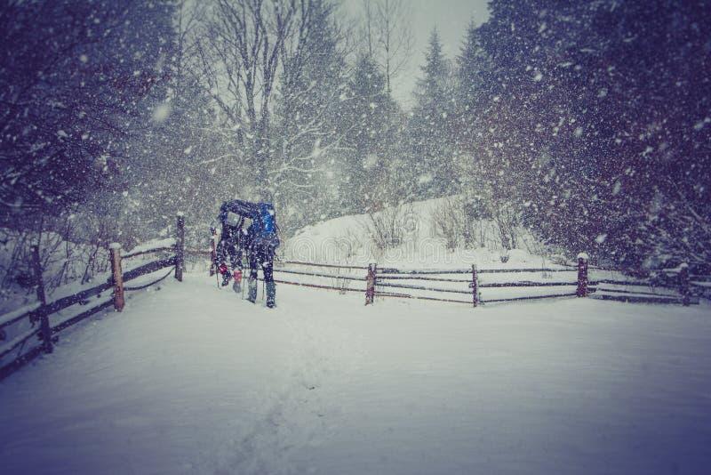 Viajeros con mochilas que caminan a lo largo del camino a través del bosque en las montañas del invierno fotografía de archivo