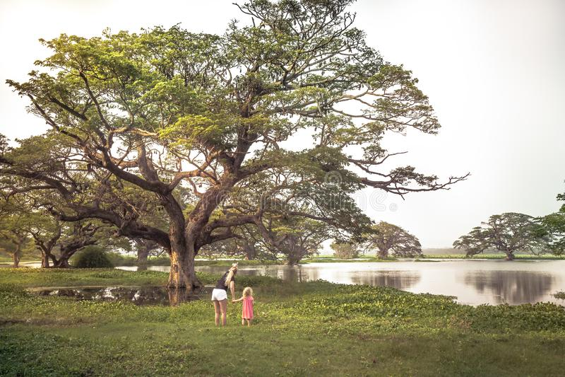 Viajeros madre de la familia e hija del niño que explora la reserva de naturaleza salvaje que mira los palos salvajes Pteropus o  imagen de archivo libre de regalías