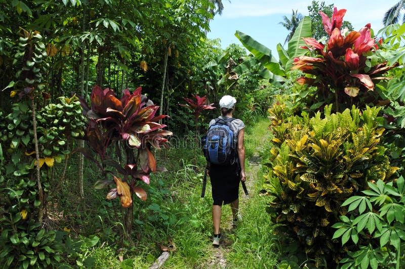 Viajes y alzas de la mujer joven en terreno tropical fotografía de archivo libre de regalías