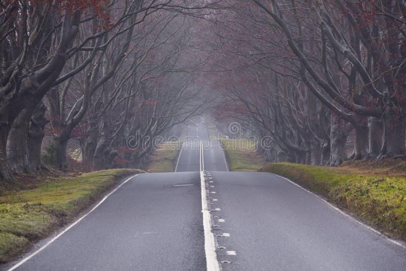 Viale allineato albero fotografia stock libera da diritti
