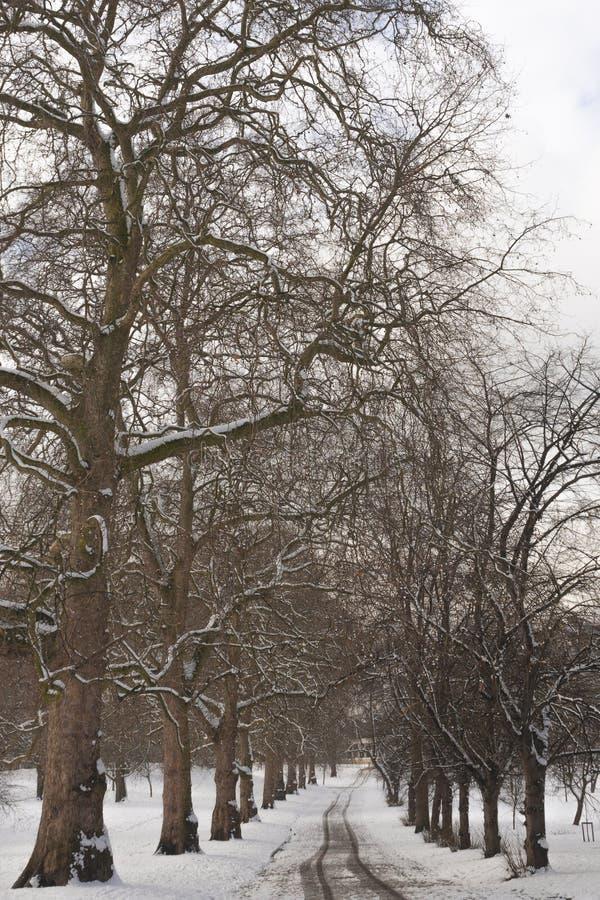 Viale con gli alberi nevosi durante il pomeriggio di inverno fotografia stock