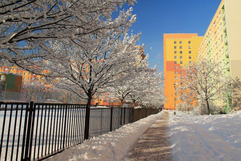Viale degli alberi nell'inverno fotografia stock libera da diritti