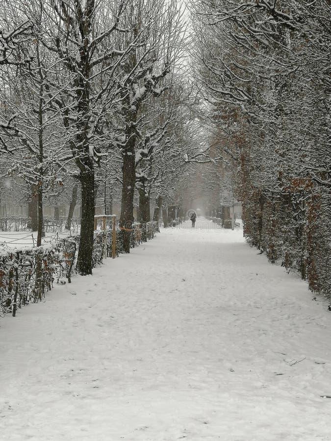 Viale degli alberi, parco, inverno di Snowy immagini stock libere da diritti