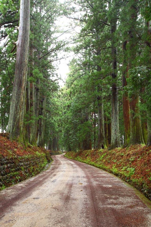 Viale del cedro di Nikko fotografia stock