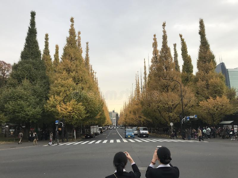 Viale del ginkgo, Meiji-Jingu Gaien, Tokyo, Giappone fotografie stock libere da diritti
