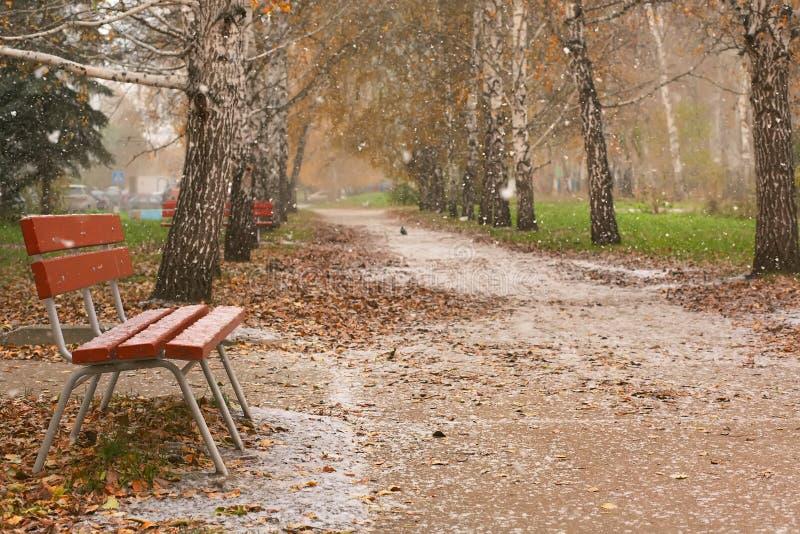 Viale della betulla di autunno Prima neve immagine stock libera da diritti