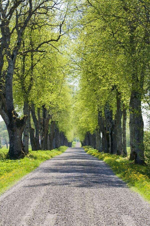 Viale della strada campestre immagini stock libere da diritti