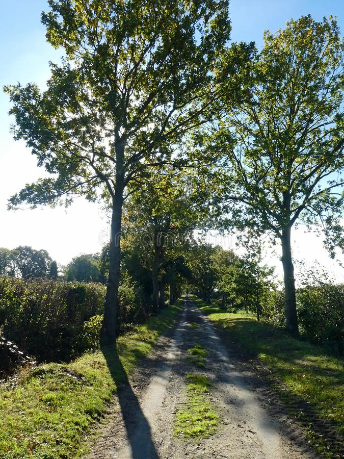 Viale delle querce, collina di Bunwell, Norfolk, Inghilterra fotografia stock libera da diritti