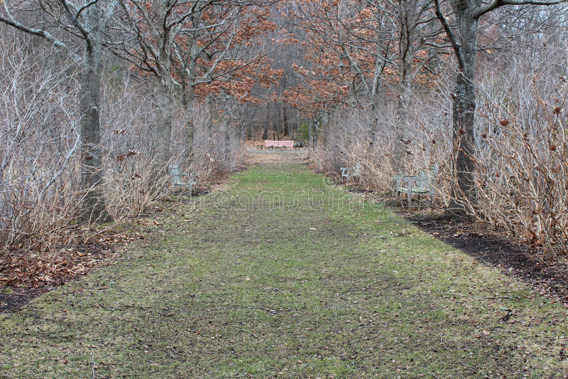 Viale delle querce nel fondo convenzionale del percorso di inverno fotografie stock libere da diritti