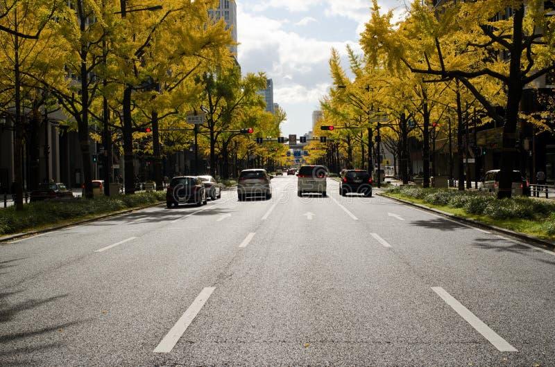 Viale di Midosuji a Osaka in autunno immagine stock libera da diritti
