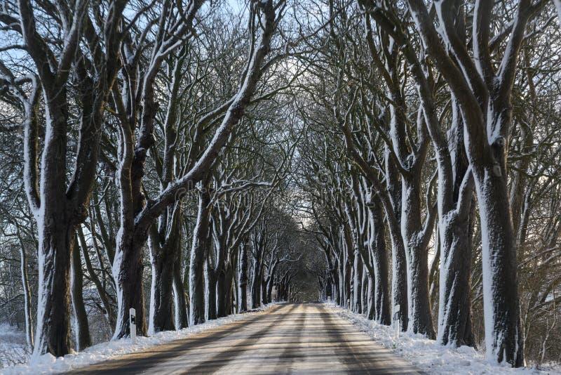 Viale nell'inverno con gli alberi nudi scuri e la neve bianca, concetto movente pericoloso, spazio della copia immagini stock