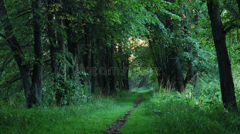 Viale verde fotografie stock libere da diritti