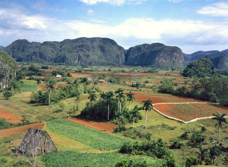 Viales Valley in Cuba known for its tobacco. The Viales Valley in Cuba is a living cultural landscape where traditional agriculture is practiced. It is an UNESCO royalty free stock image
