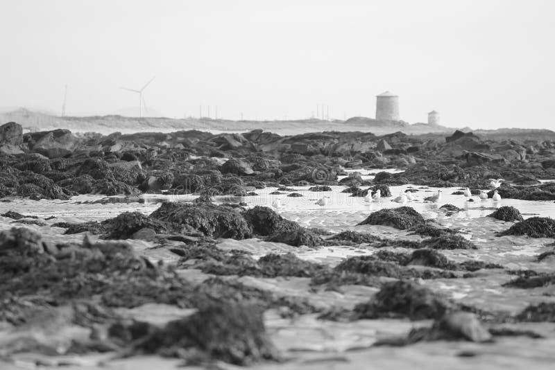 Viana do Castelo coastline stock photography