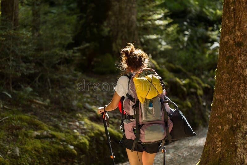 Viandante della donna con lo zaino che cammina nella foresta del faggio indigeno immagine stock libera da diritti