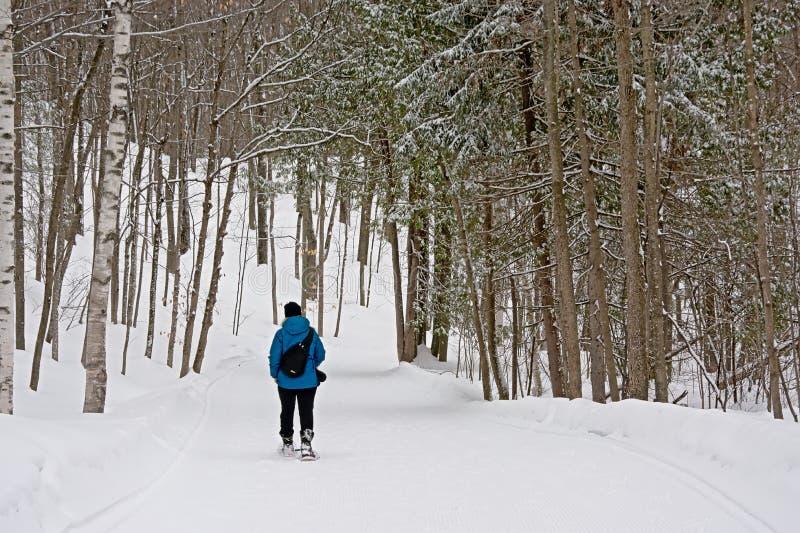 Viandante della racchetta da neve su un throug una foresta nuda di inverno fotografia stock libera da diritti