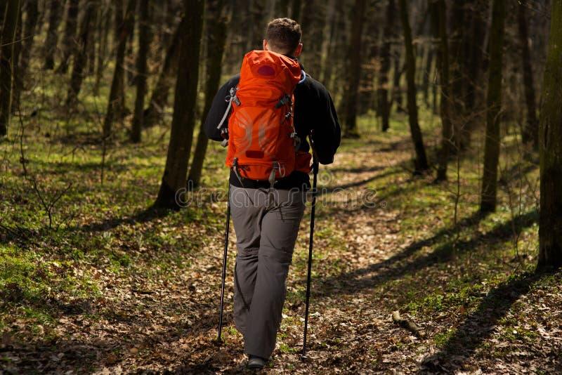 Viandante maschio che guarda al lato che cammina nella foresta immagini stock