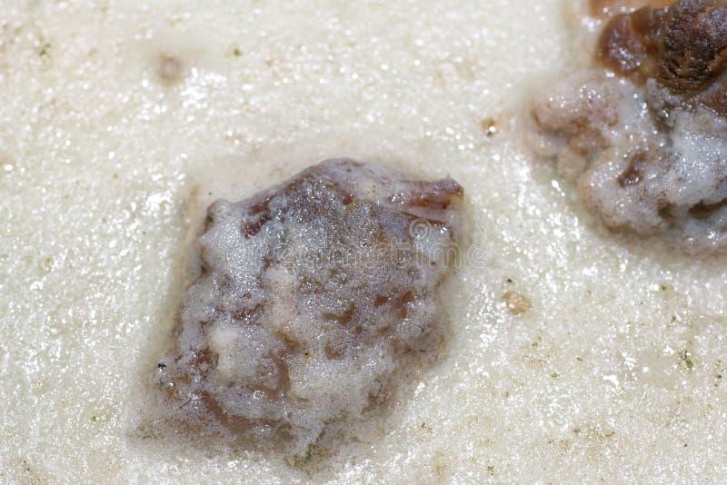 Viande froide de gelée. image stock