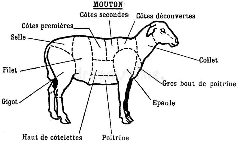 viande-mouton royalty free stock photo