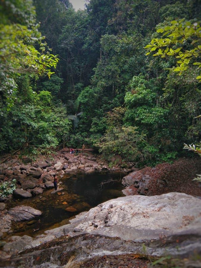 Vibe леса стоковая фотография rf