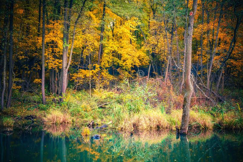 Vibrant autumn forest reflecting in a river royalty free stock photo