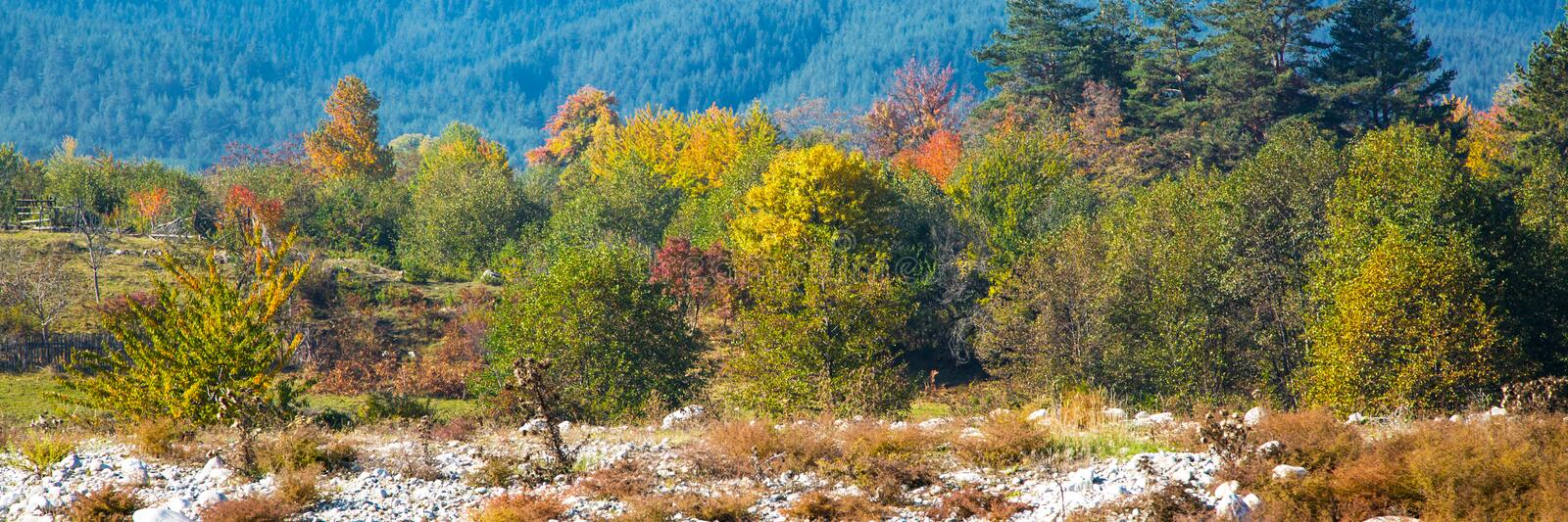 Vibrant autumn panorama background with colorful. Green, red and yellow trees and pine trees far away stock photography