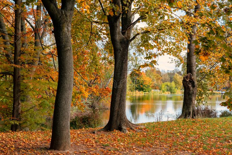 Vibrant autumn trees and reflection in the lake in Szombathely at csonakazo to Lake.  royalty free stock images