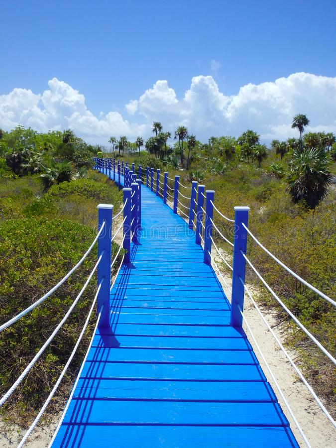 Vibrant blue boardwalk into grasslands. royalty free stock photography