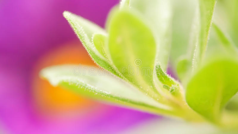 Vibrant color magenta green nature background. Abstract poweful, full of life summer image. Vibrant color magenta and green nature background. Abstract poweful stock photo