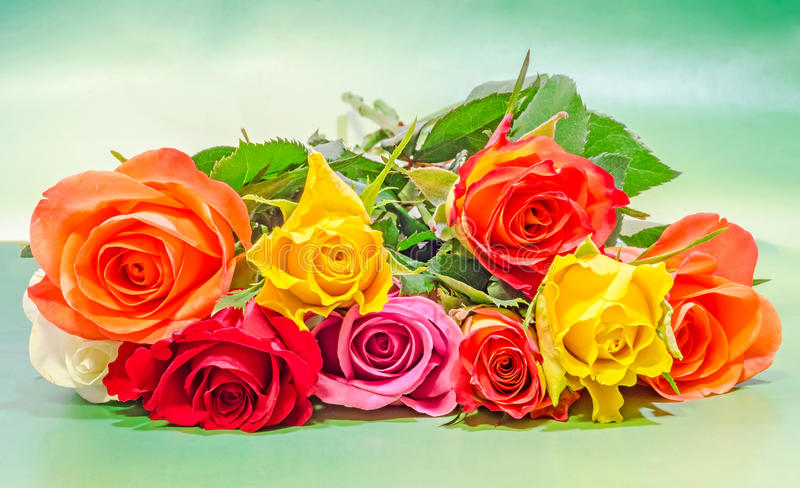 Vibrant colored (red, yellow, orange, white) roses flowers, close up, bouquet, floral arrangement, green background.  stock images
