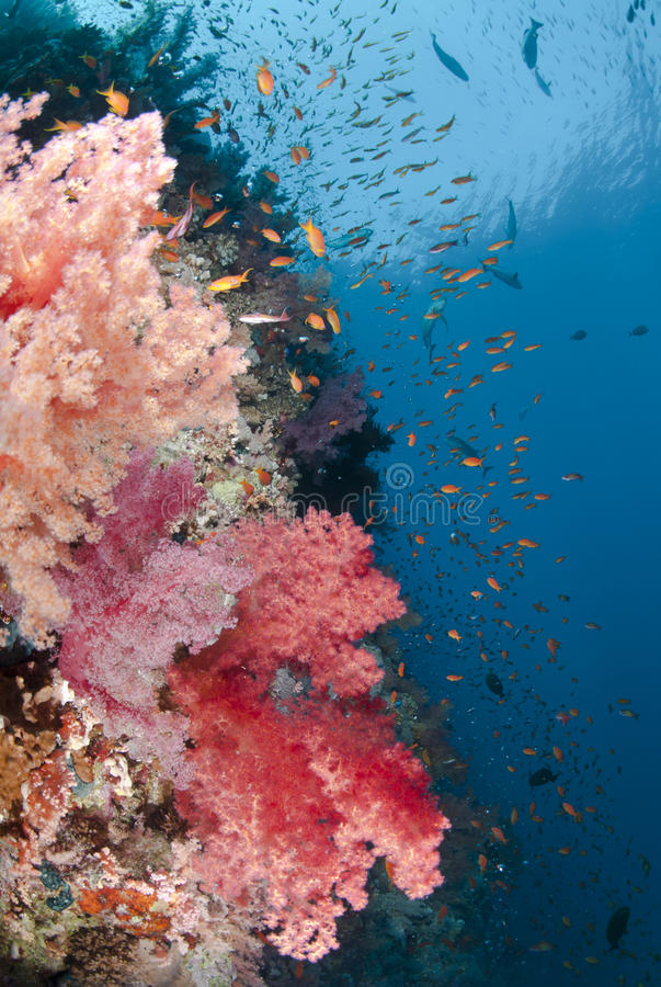 Vibrant and colourful tropical coral reef scene. stock images