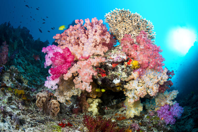 Vibrant coral reef royalty free stock image