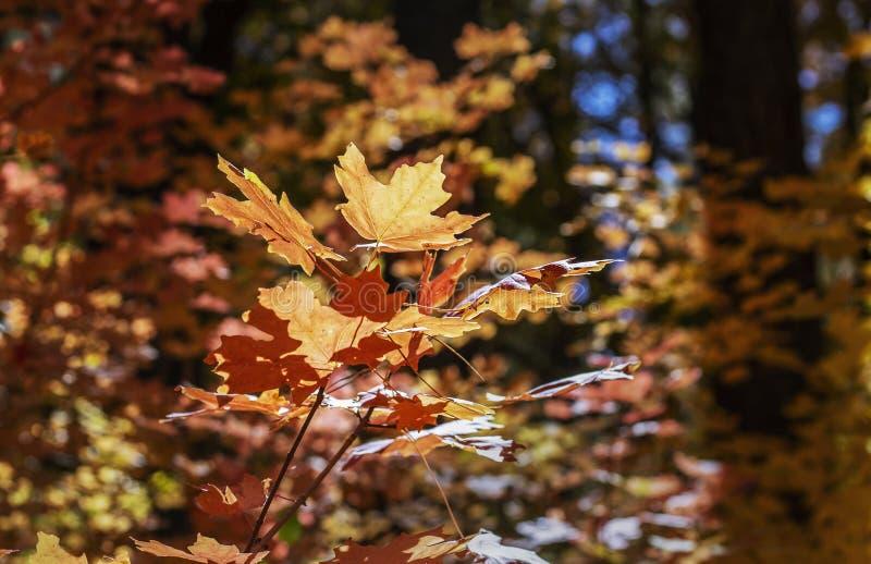 Vibrant Fall Foliage A Sedona Arizona 2019 fotografia stock libera da diritti
