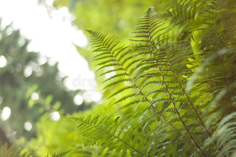 Vibrant Fern Canopy With Fronds Stock Photos