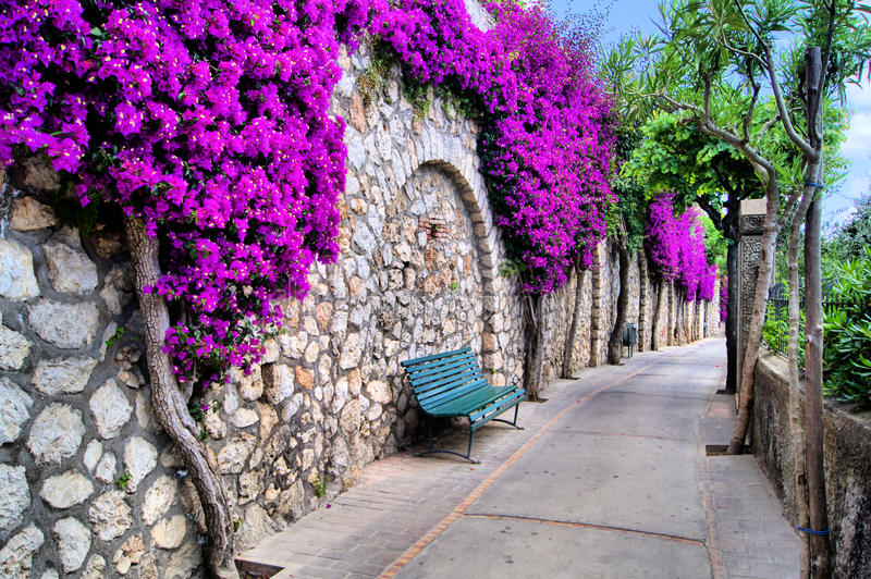 Flower lined path. Vibrant flower draped pathway in Capri, Italy stock images