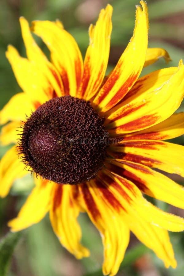 The Vibrant Flower stock photo